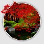 紅葉で癒されるアプリ「Zen Garden -Fall」